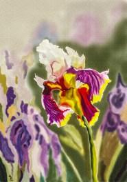 paint iris (896x1280)