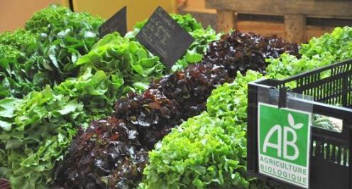On pourrait nourrir le monde entier en bio à partir de 2050 !