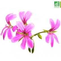 Huile Essentielle de Géranium Rosat bio (10 ml) - Abiessence