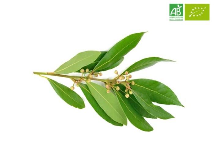 Huile Essentielle de Ravintsara bio (10 ml) - Abiessence