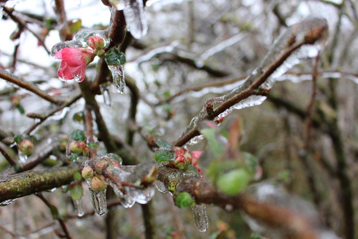 février au jardin