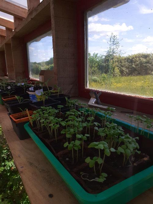 semis fenêtre