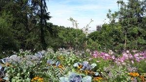 Read more about the article Planter un jardin forêt