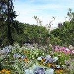Planter un jardin forêt