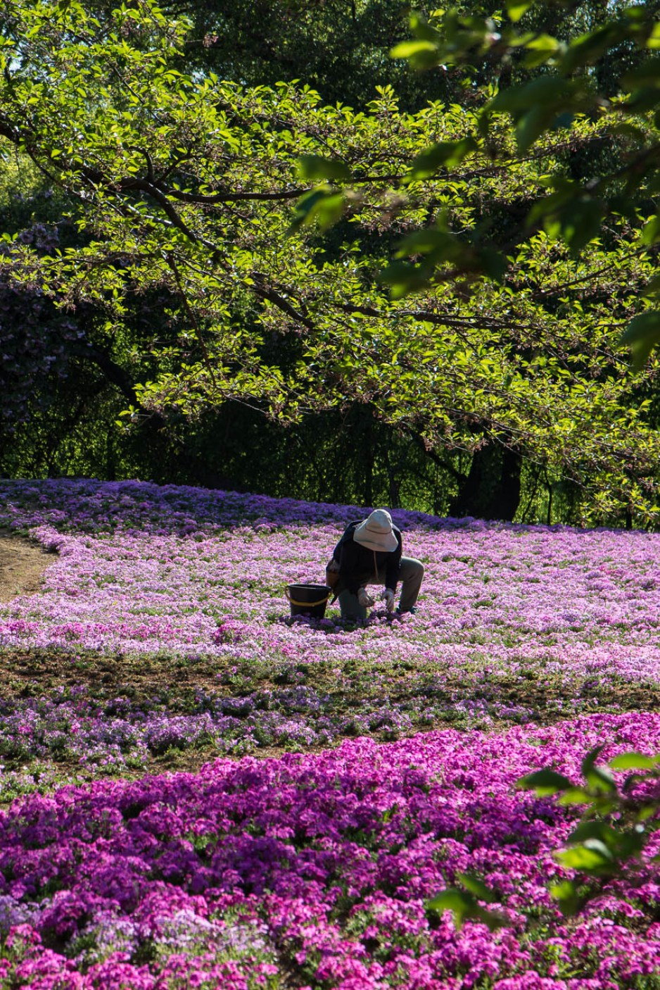 voyage-japon-tatebayashi-tobu-garden-treasure-6