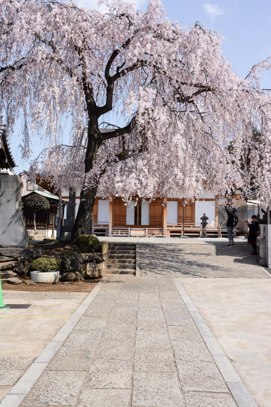 voyage tokyo hanami cerisiers fleurs