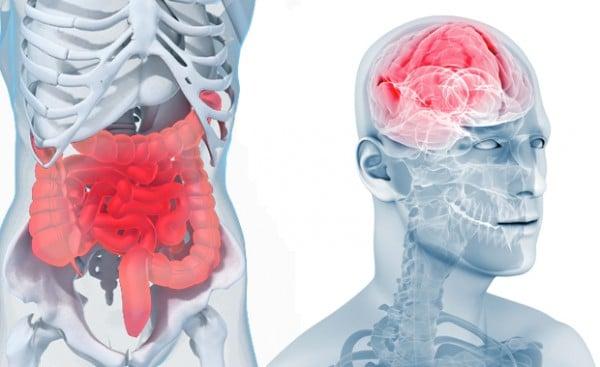 L'intestin et ses neurones sont reliés au cerveau crânien, il l'influence en permanence