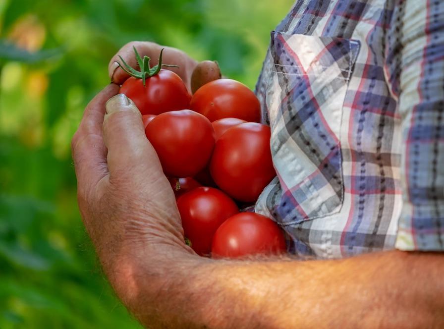 Le bio c'est avant tout des aliments naturel et normal