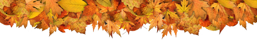 sports_fall_leaves_banner_wide_top