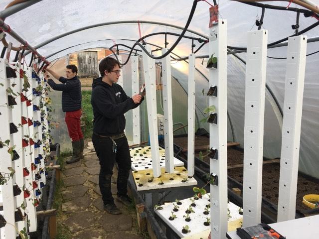 Etudiants de BTSA Gestion et Maîtrise de l'eau (GEMEAU) travaillant dans la serre d'aquaponie