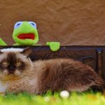 Kermit part en vacances