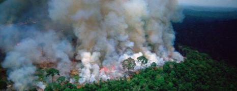 Le poumon de notre terre brûle!