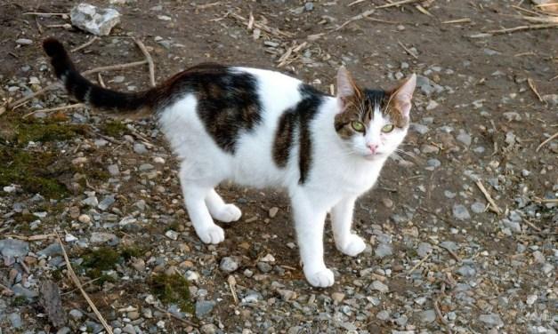 La stérilisation, nouvelle solution pour éviter la propagation des chats errants