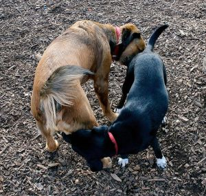 What is the best way to greet a new dog?