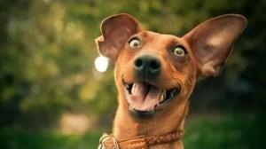 ExcitedDog
