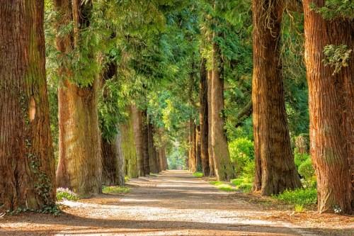 Improve prayer life with a nature walk