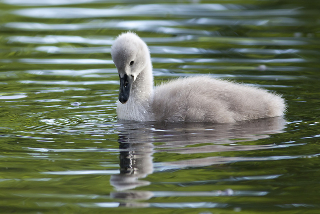 The Ugly Duckling Tales From The Frontline Leadinglearner