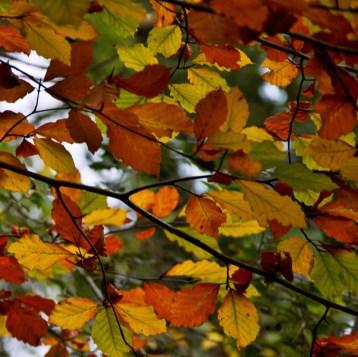 2016-10-31-autumns-dead-leaves-7