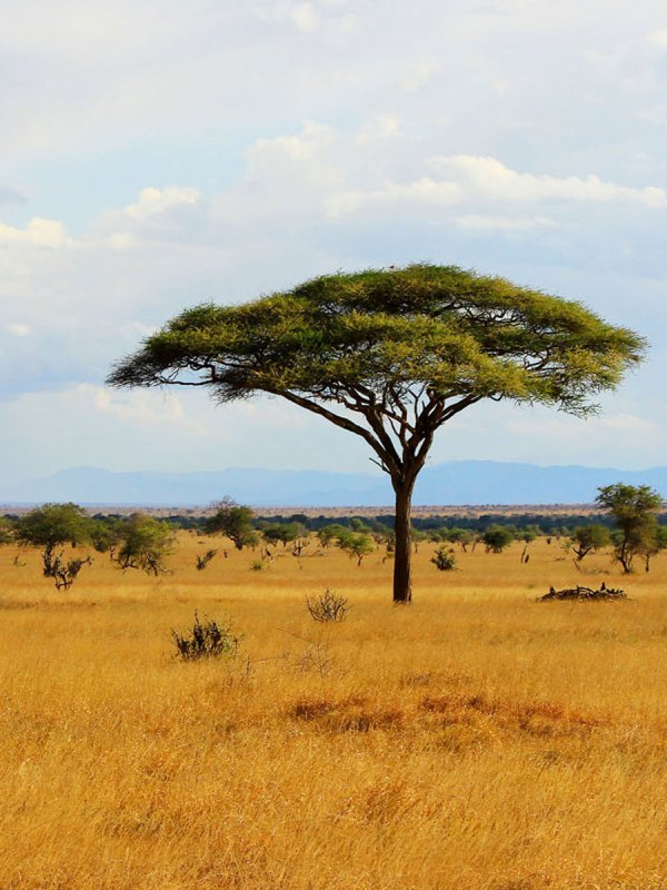 Kenya Pure Bush Safari