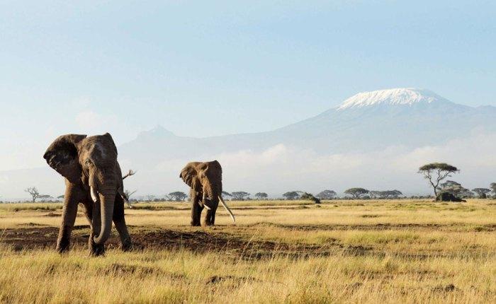 The Big Five Tanzania Safari