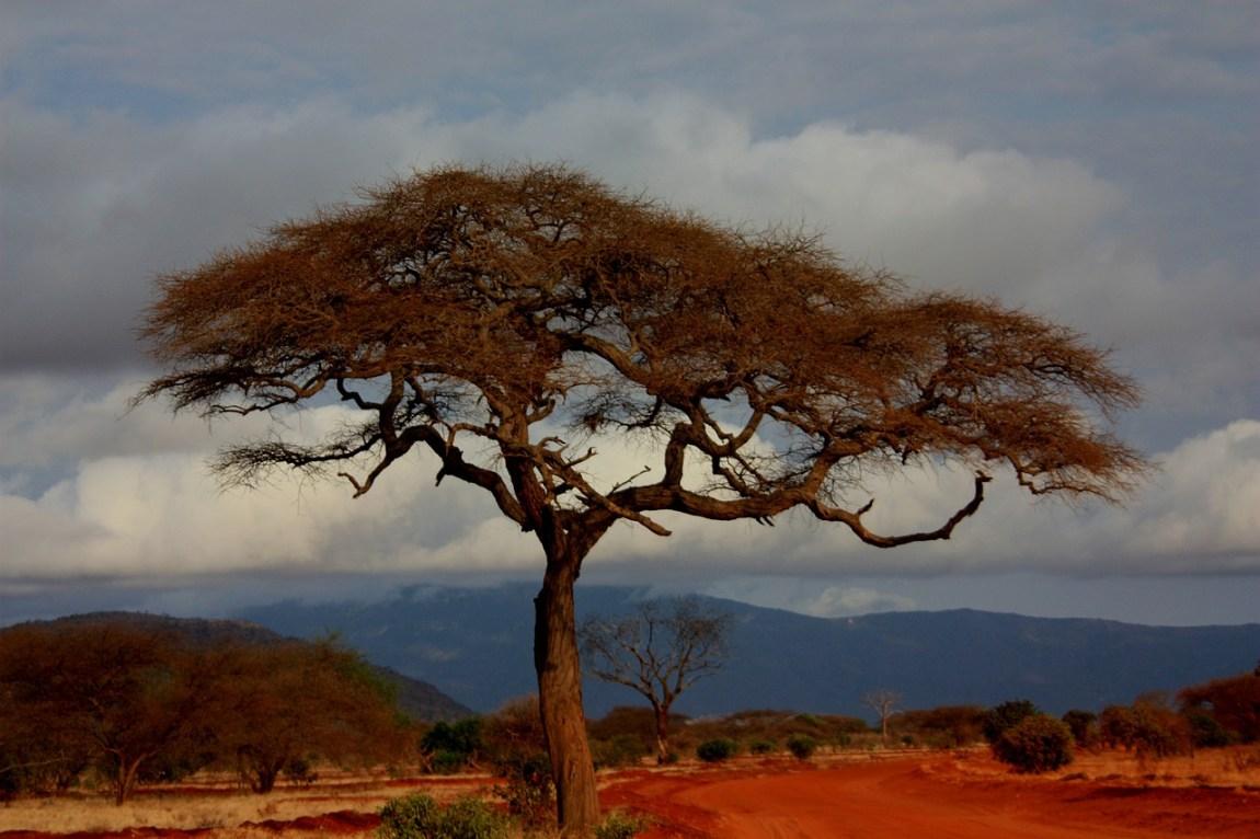 Kenya Safari - Incredible Landscapes