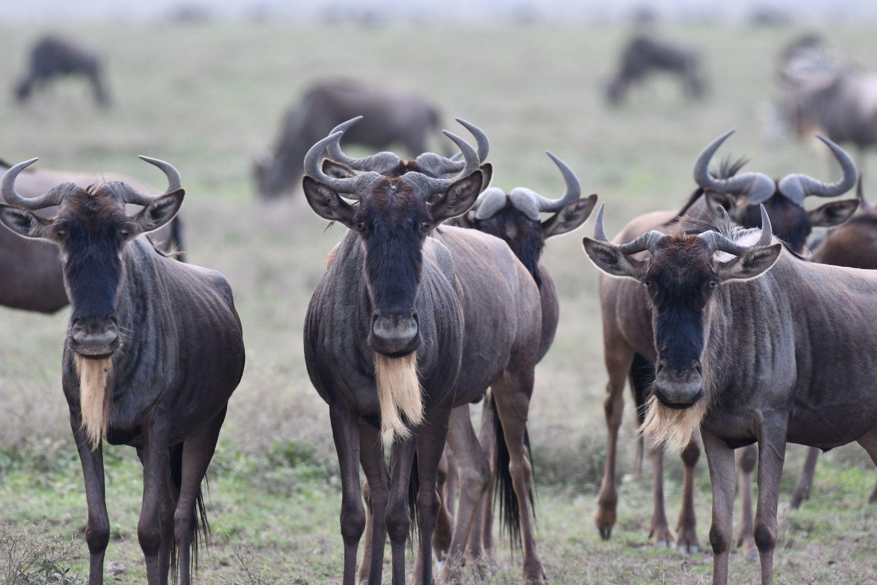 10 Days 9 Nights Special Serengeti Migration Safari
