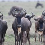10 Days 9 Nights Special Serengeti Migration Safari