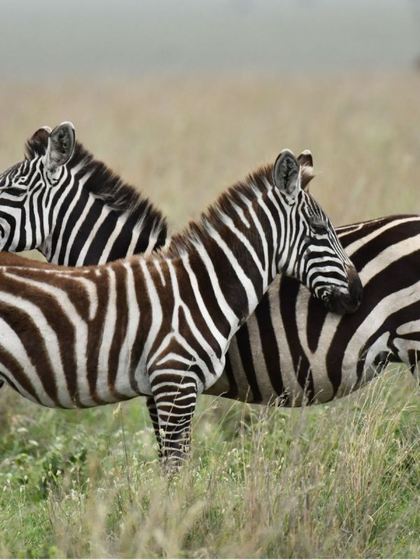 12 Days 11 Nights Taste Of Northern Tanzania Safari And Zanzibar