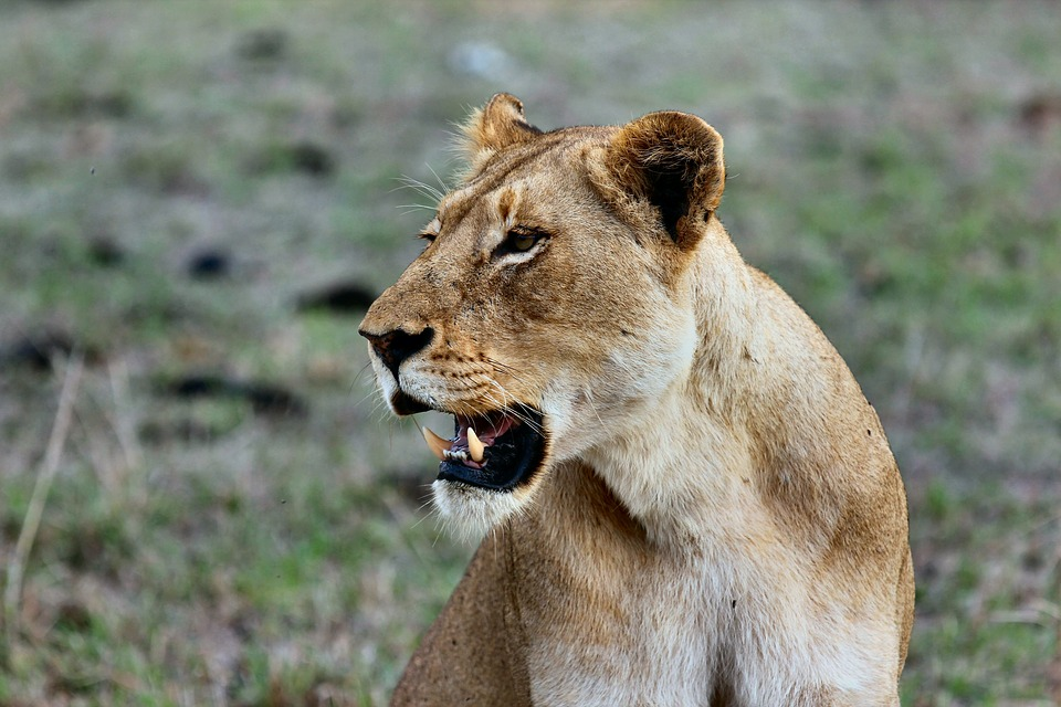 What Makes Tanzania Safari The Ultimate Safari Adventure?