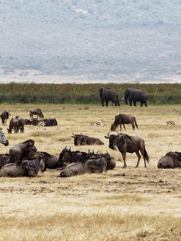 8 Days Tanzania Great Migration Experience