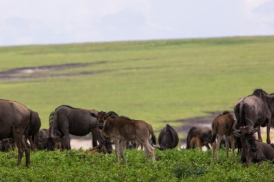 great migration tour - The Southern Serengeti
