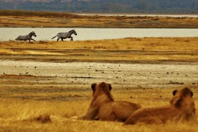 great migration tour - The Masai Mara National Reserve
