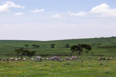 Great migration tour - The Central Serengeti (Seronera)