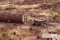 Ce n'est pas aussi simple de reconstruire la forêt
