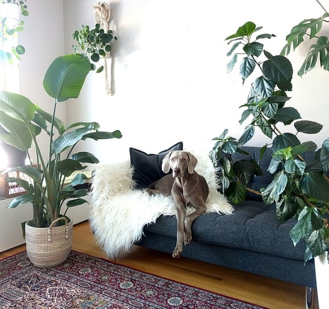 The Best Indoor Trees Leaf And Paw
