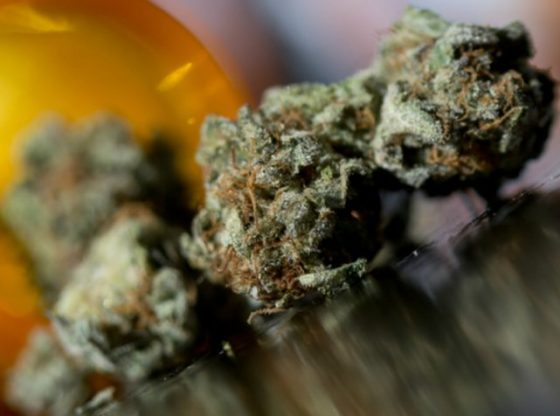 How does a Marijuana Supply Chain Business Operate?