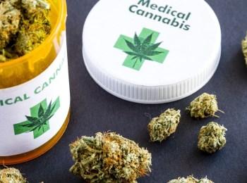 florida cannabis programs www.leafedin.org