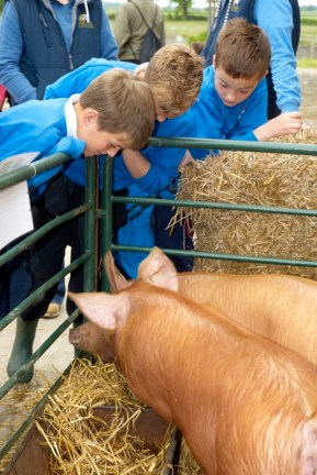 School children check out the pigs