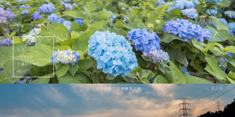 石牌縣界公園,一片水色繡球花,在北宜公路上模糊了劃分的交界/新北坪林,宜蘭景點