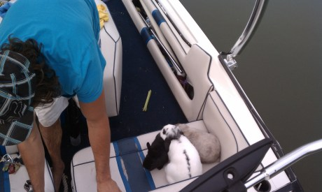 Bunnies boating