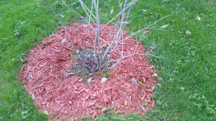 DIY plant grant trees landscaping