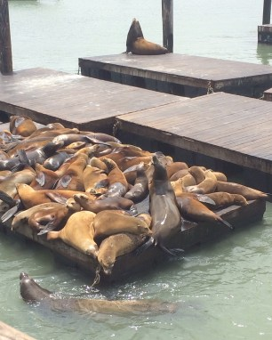 The infamous sealions