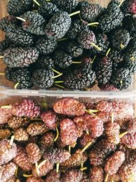 mulberries 4