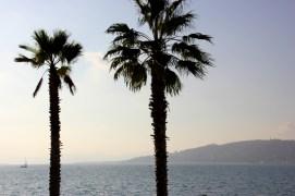 Antibes   palms