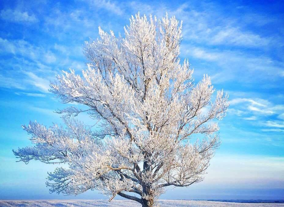 Breathtakingly beautiful, I would like to keep it all winter long, but there is only ever enough for today.
