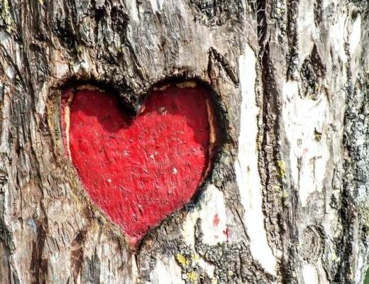 image red heart carved into tree