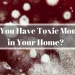 Toxic Mould – How Safe is Your Home?