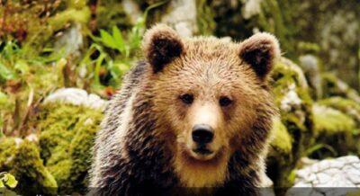 LEAL ANIMALISMO: BREAKING NEWS DAL TAR STOP ALLA CATTURA DI JJ4