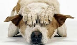ALLARME BOTTI: TENETE IN SICUREZZA GLI ANIMALI PER EVITARE FUGHE E INCIDENTI