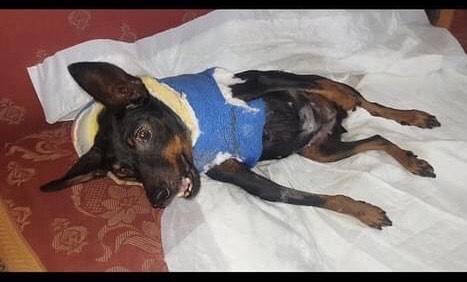 23 dicembre aggiornamento ore 21: CHICCA è ricoverata nella clinica veterinaria ed è sotto terapia per stabilizzare la pressione.